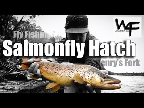 W4F - Fly Fishing - Salmonfly Hatch On The Henry's Fork, Idaho