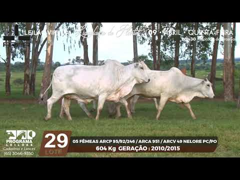 LOTE 29