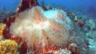 Flores Indonesia underwater world