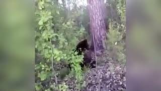 Мужик пнул медведя