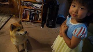 【しばわんこ日記】タロウ扉を開ける【柴犬タロウ】 Shibainu