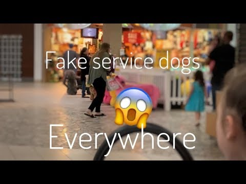 FAKE SERVICE DOGS EVERYWHERE ~ ONE TIGRIS