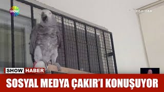 Bu kuşun içine insan kaçmış!