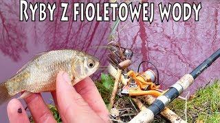 Ryby z fioletowej wody - tajemnica leśnego bajorka - spławik