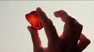 Чому бурштинова мафія - безсмертна