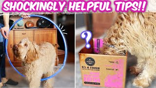 FIX PUPPY PROBLEMS WITH EASY TRICKS!!  Stop nipping, jumping & barking FAST
