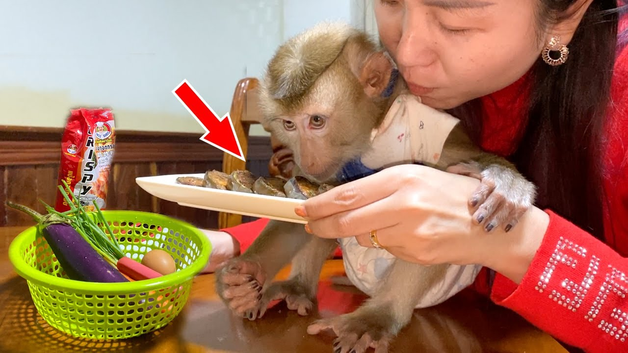 Baby Monkey DouDou Very Like To Eat Food That Cook By Mom