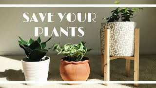 SAVE YOUR INDOOR PLANTS // how to repot