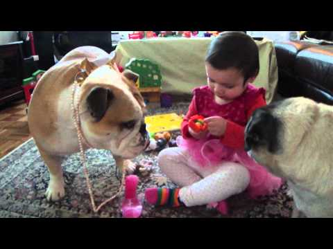 Funny Bulldog in Pearls with Toddler as his stylist