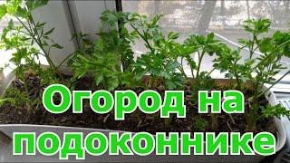видео Выращивание овощных культур и зелени в квартире