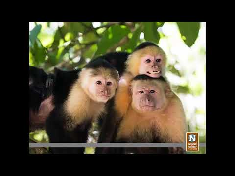 Costa Rica's Most Diverse Nature Adventures   Wildlife Travel Webinar