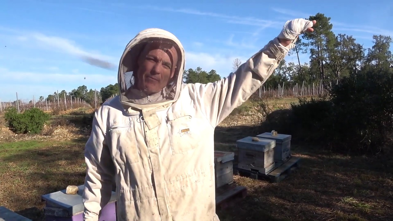 Beehive installation on Domaine Mirabeau with Philip Prior