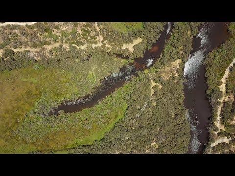 Black Bream Fishing Swan & Canning Rivers, Perth (Summer 2018)