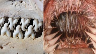 Animals With The Most Terrifying Teeth!