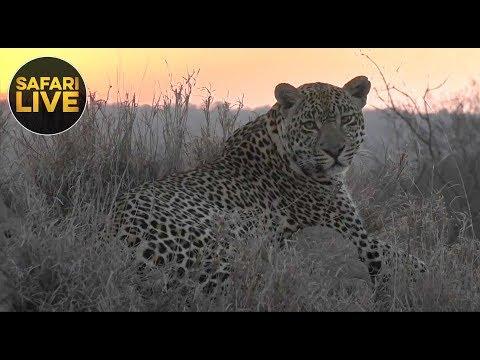 safariLIVE - Sunrise Safari - October 26, 2018