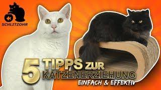 🔥5 Tipps zur Katzenerziehung | Katzenverhalten verstehen | Katze erziehen