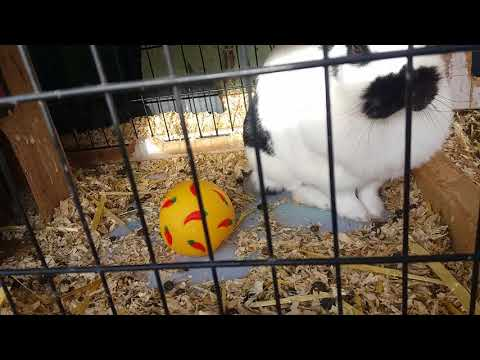 Meine Kaninch heißen jetzt anders❤🌸
