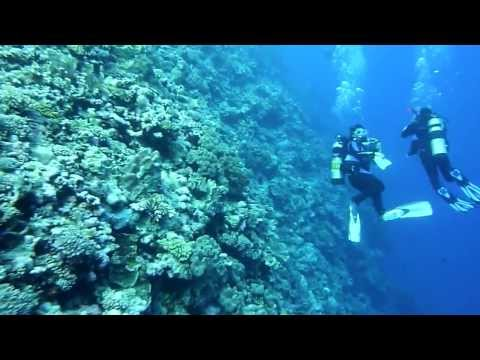 Diving the Osprey Reef / Coral Sea