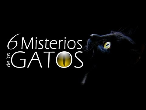 Adangel X: 6 Misterios de los Gatos