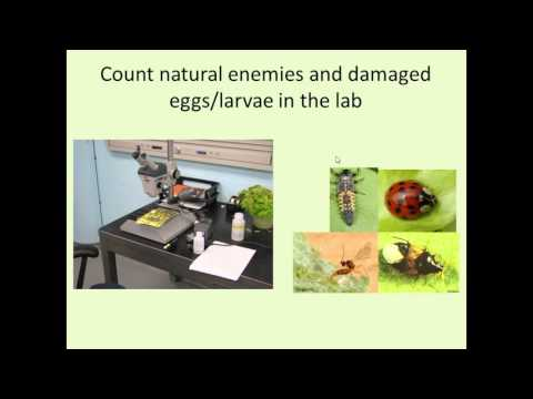 Natural Enemies and Biological Control of Lepidopteran Brassica Pests in Urban Agriculture