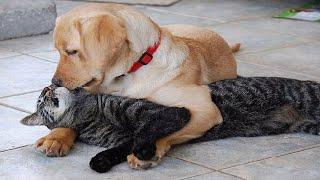 Самые смешные животные Приколы с котами и собаками 2021 8