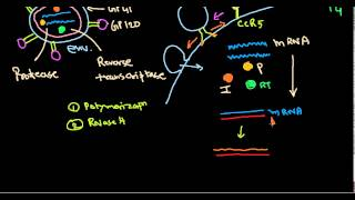 Video HIV life cycle download MP3, 3GP, MP4, WEBM, AVI, FLV September 2018