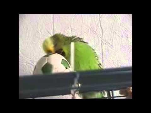 Pucki   Ein völlig irrer Vogel
