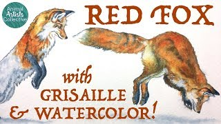 AAC: Red Fox + Grisaille & Watercolor
