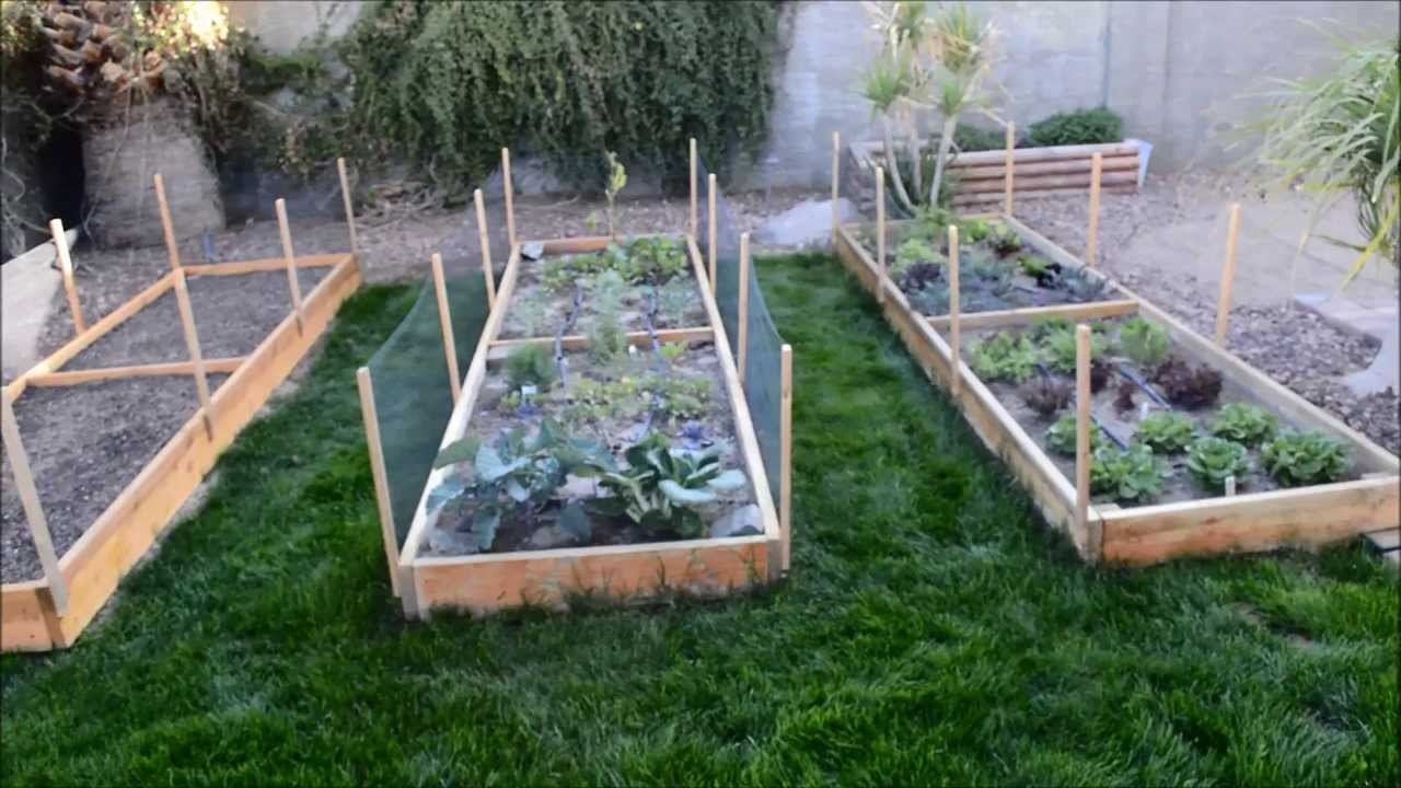 raised garden beds vegetable garden in phoenix arizona youtube