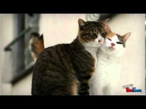 10-cosas-que-debes-saber-sobre-un-gato