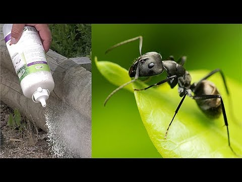 comment se d barrasser des fourmis au naturel youtube. Black Bedroom Furniture Sets. Home Design Ideas