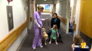 Therapy Dog Yuba Helps Kids Recuperate