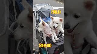 개 팔자가 상팔자 맞나요?ㅋㅋ/ 유모차 탄 강아지 / …