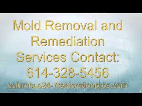 Columbus OH Mold Removal and Mold Remediation Restoration Experts