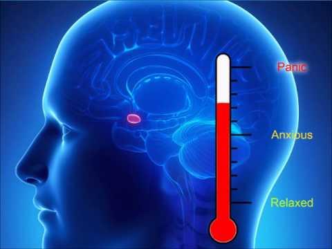 Amygdala hijack fight or flight response how to stop anxiety