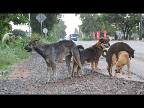 Awesome Sweet Rural Dogs In Village!! Dog Meeting Nearly Morning 2019