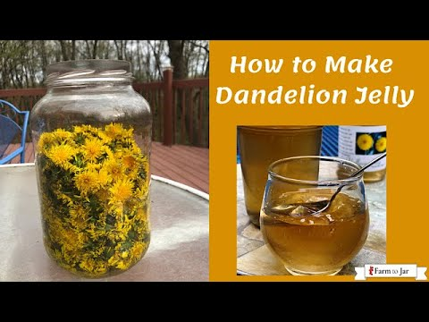 How to make Dandelion Jelly - infused with lavender