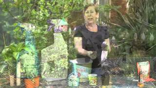 How to Get Rid of Aphids & White Flies on Basil : Garden Space