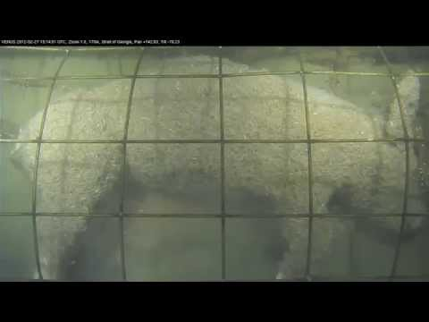 Thumbnail: Caged pig forensic experiment in the ocean