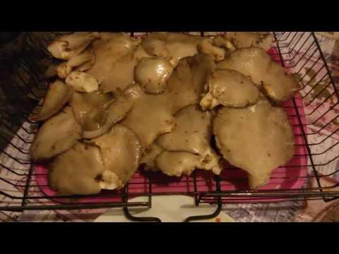 Блюда из замороженных грибов — 19 рецептов с фото. Что