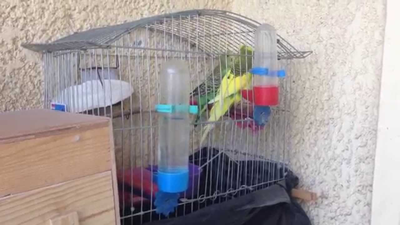 how to make a budgie nest