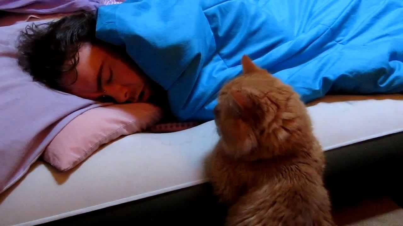 Our Funny Cat Quot Why Won T He Wake Up To Play With Me