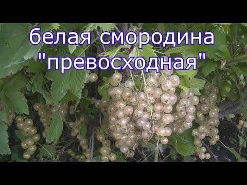 Вопрос: Каких цветов могут быть ягоды у разных сортов смородины?