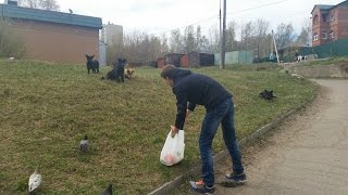 Видео-акция!Кормим Бездомных животных!Спасибо вам!!!