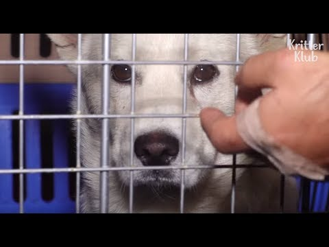 Terrible News Has Come To The Dog's Happy Family Without Notice.. (Part 2) | Kritter Klub