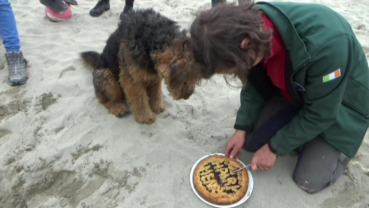 Leichtes Rezept für Linzertorte - spezielle Zutat: Sand vom irischen Strand!