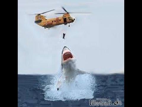 Die Gefährlichsten Haie