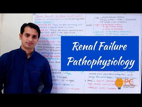 renal-failure-pathophysiology:-basic-features-of-acute-and-chronic-renal-failure