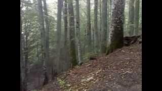Il bosco verso il Santuario della Verna