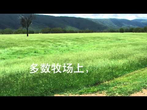 Tallawalah Movie Standard Chinese